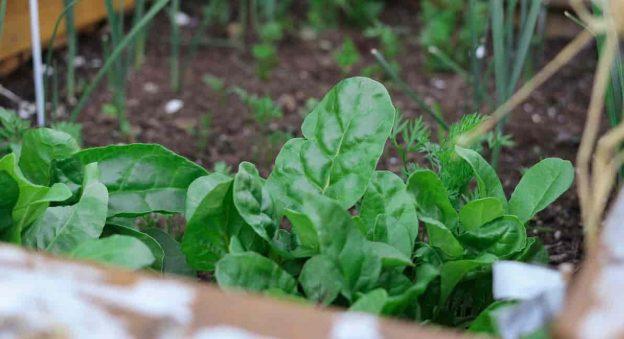 kitchen-garden-certification-min